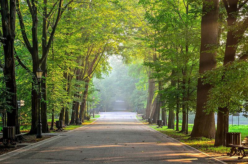 Aleja drzew i latarni